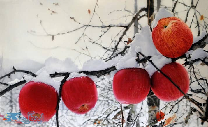 بهترین درخت میوه برای مناطق سردسیر