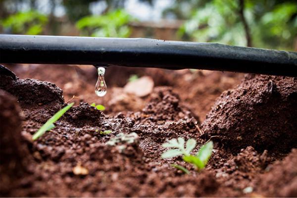 آب مورد نیاز در آبیاری قطره ای