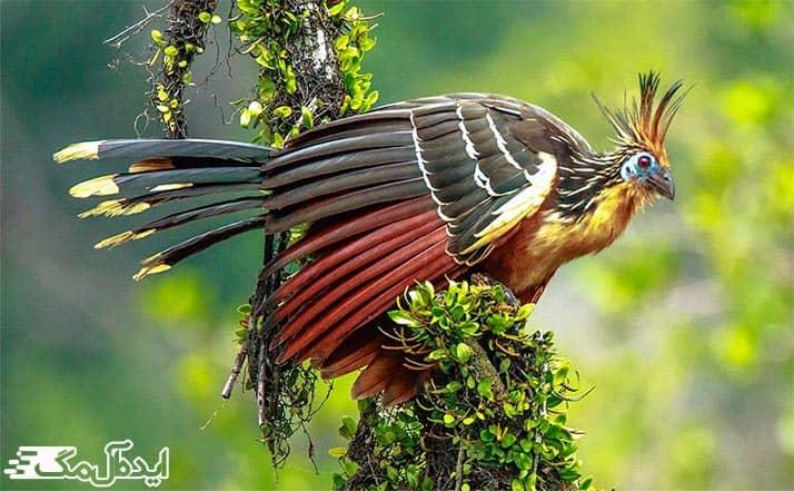 پرندگان زیبای جنگل بارانی آمازون