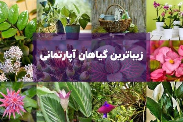 آشنایی با زیباترین گیاهان آپارتمانی