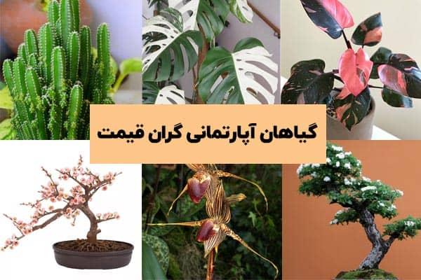 آشنایی با گیاهان آپارتمانی گران قیمت