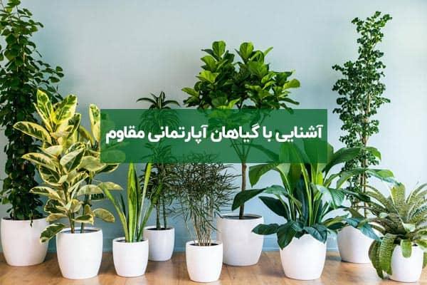 آشنایی با گیاهان آپارتمانی مقاوم