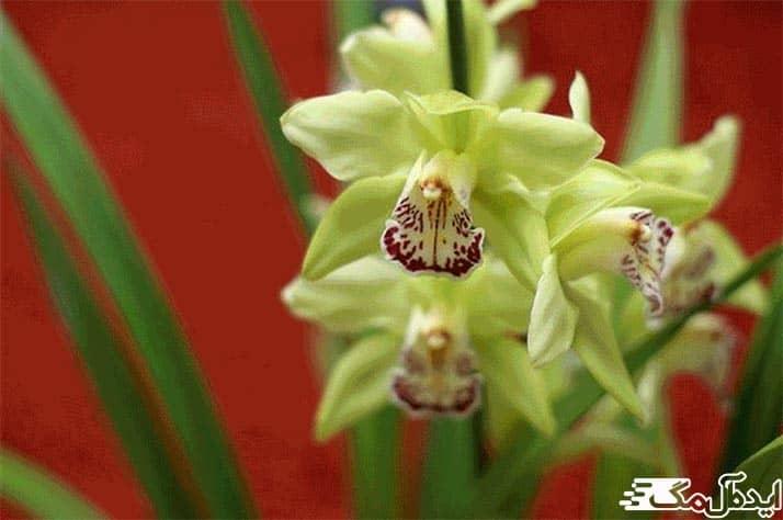 گران ترین گل های جهان