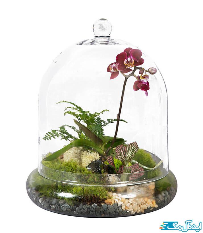 گیاهان آپرتمانی لوکس