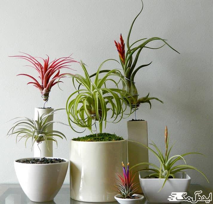 زیباترین گیاهان آپارتمانی
