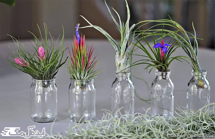 گیاهان آپارتمانی هوازی