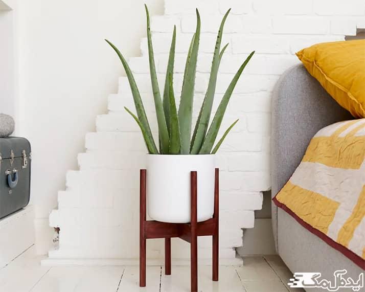 بهترین گیاهان آپارتمانی برای نگهداری