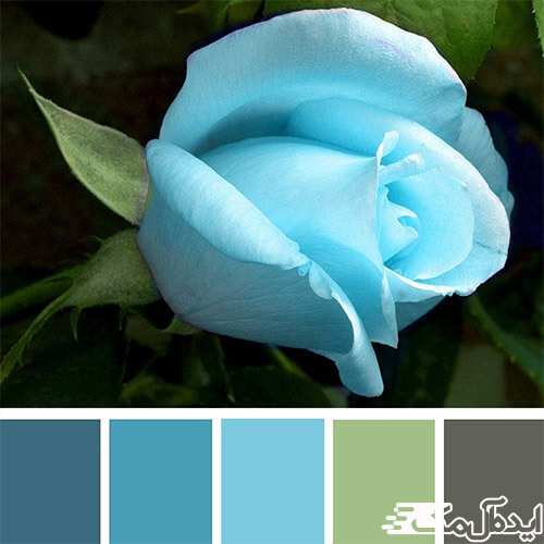 ست رنگ آبی آسمانی در طبیعت