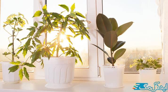 نور بهینه برای گل های آپارتمانی