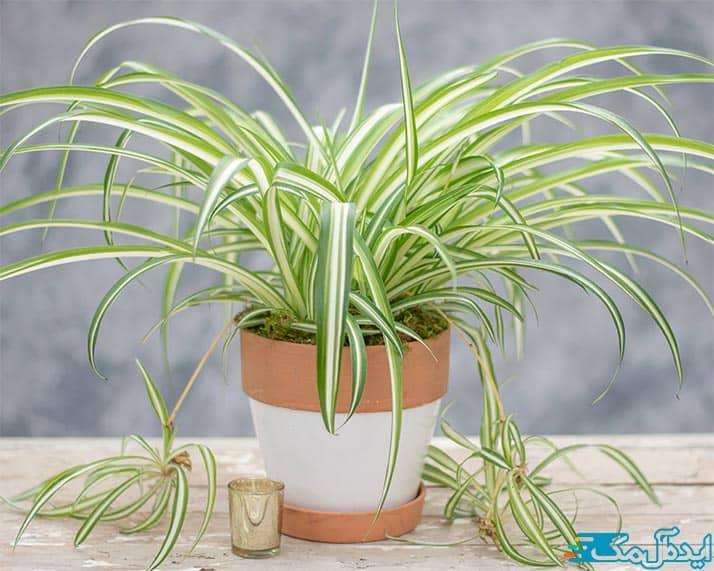 بهترین گیاهان آپارتمانی مقاوم به کم آبی