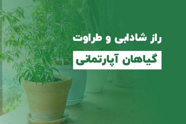 راز شادابی گیاهان آپارتمانی