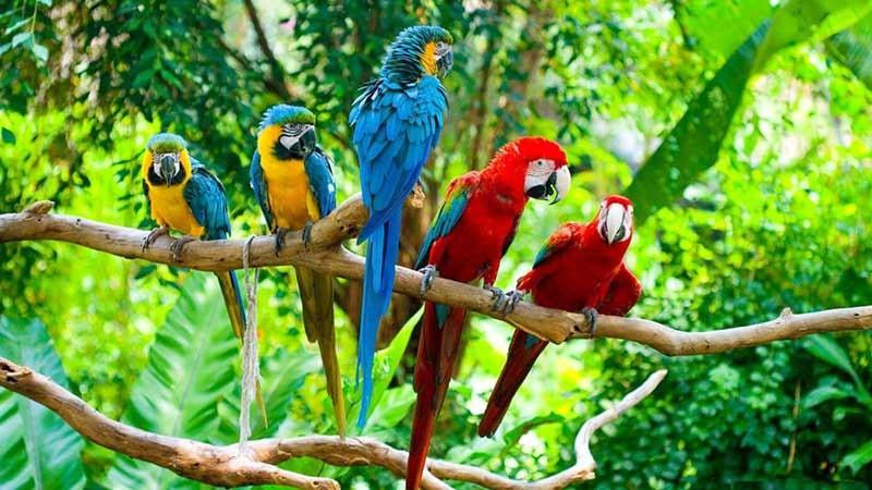 شروع فروش پرندگان زینتی