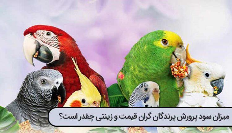 پرورش پرندگان زینتی