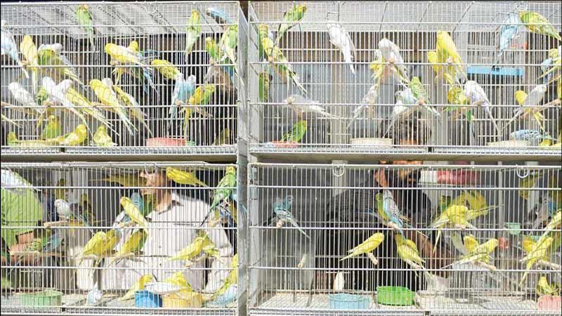 سود پرورش پرندگان زینتی